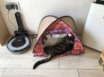 猫ちゃんたちもグランピングの画像