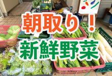朝取れの新鮮野菜が買える!「野菜直売所」の画像