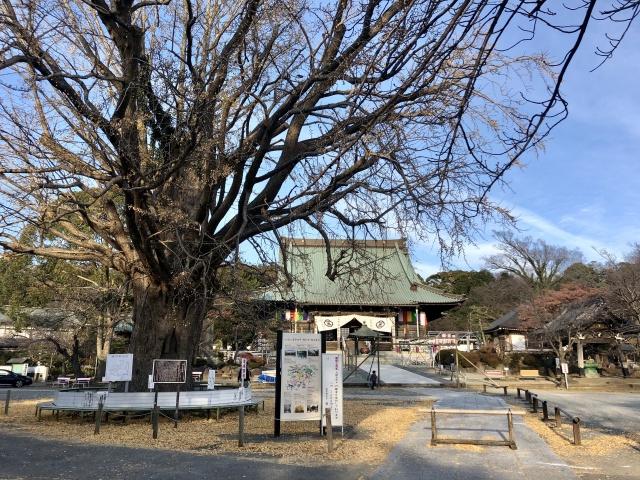藤沢市にあるおすすめのお寺をご紹介!特徴やご利益も!の画像