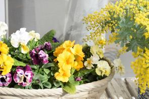 横浜市中区でガーデニングにおすすめの花屋2選!の画像
