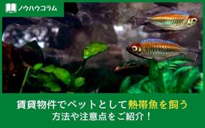 賃貸物件でペットとして熱帯魚を飼う方法や注意点をご紹介!の画像