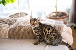 「ペット可」の賃貸で動物と快適に暮らすための注意点をチェック!の画像