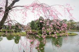 密を避けた外出にもおすすめ!千葉市にある人気の公園をご紹介の画像