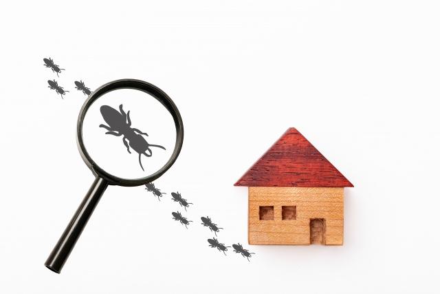 賃貸物件に害虫が発生する原因を知って快適な暮らしにつなげよう!の画像