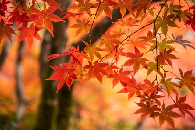 宮崎県都城市でおすすめの紅葉スポットをピックアップ!の画像