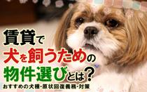 賃貸で犬を飼うための物件選びとは?おすすめの犬種・原状回復義務・対策の画像