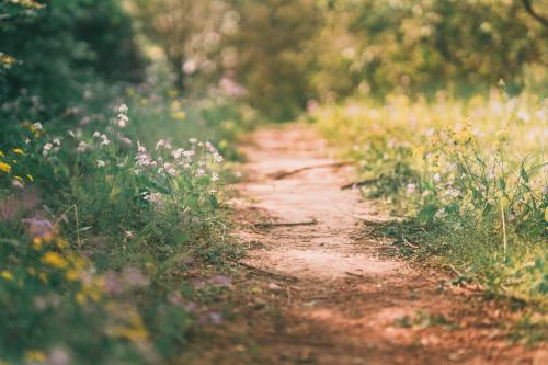 松山市の公園のご紹介・葉佐池古墳公園はご存じですか?の画像