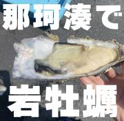 7月30日:那珂湊で岩牡蠣の画像