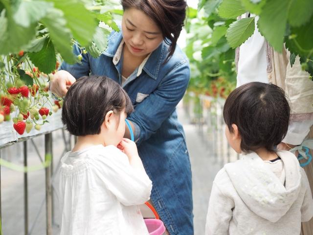 長野県伊那市でおすすめの人気観光スポットはどこ?の画像
