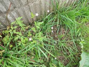 賃貸アパート周りの雑草はどのように管理するの?の画像