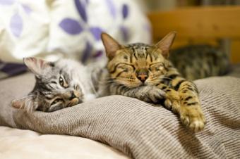 賃貸物件でペットと暮らすなら原状回復に注意!猫との生活のポイントは?の画像