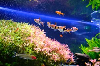賃貸物件でも熱帯魚は飼育できる?ペットと一緒に楽しく暮らすにはの画像