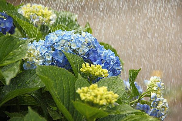 今年二度目の梅雨?【ユーエルネット尼崎店のスタッフブログ】の画像