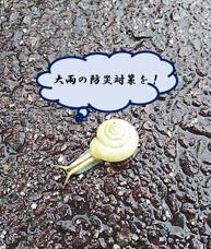 大雨の防災対策を!の画像