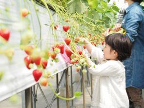 家族で楽しめる!山陽小野田市にある「花の海」をご紹介!の画像