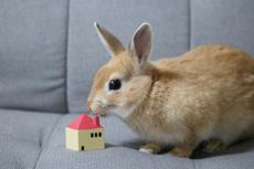 賃貸物件でペットを飼うならウサギがおすすめ?飼う方法と注意点とはの画像
