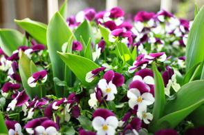 山梨県中央市周辺でガーデニングにおすすめの花屋2選!の画像