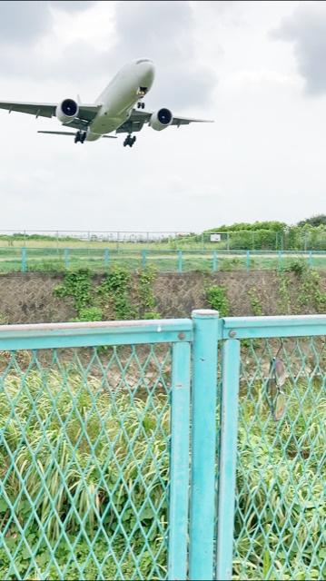 伊丹空港 着陸の迫力に圧倒される!!の画像