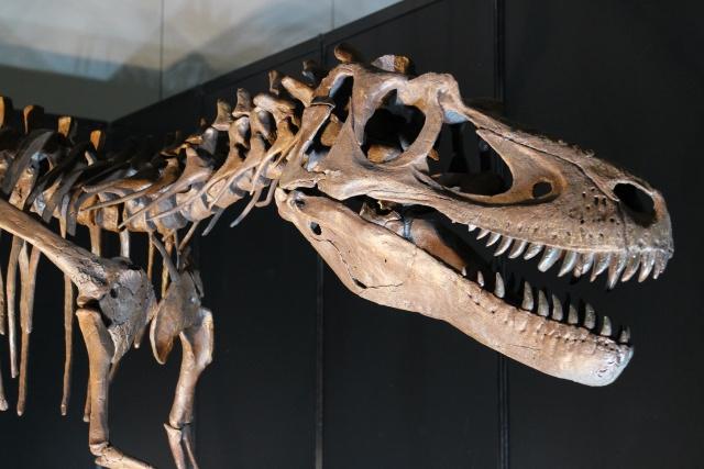盛岡の「岩手県立博物館」は見どころが多い!特徴やアクセス情報もご紹介の画像