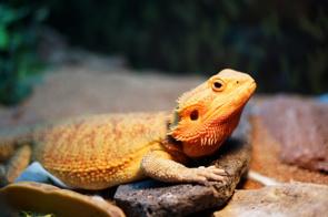 蒲田周辺で爬虫類を扱うペットショップからおすすめ2店をチェック!の画像