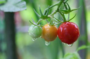 マイホームの庭で家庭菜園を楽しみたい!コツや注意点は?の画像