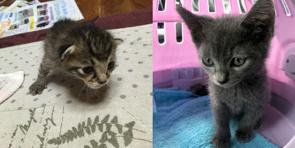保護猫ちゃん☆の画像