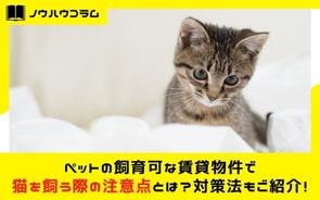 ペットの飼育可な賃貸物件で猫を飼う際の注意点とは?対策法もご紹介!の画像