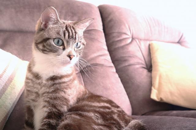ペット可賃貸物件で猫を飼う際に注意したいポイントの画像