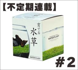 10月14日:【不定期連載】育てる水草#2の画像