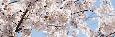 来春の新生活に向けて・・・の画像