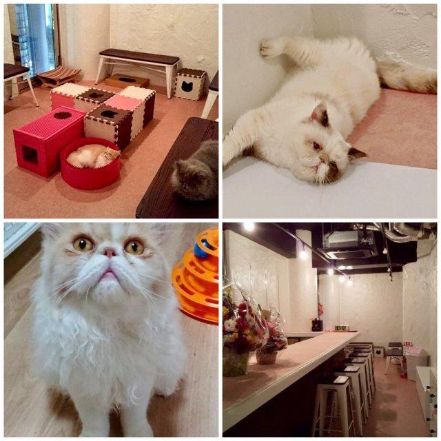 猫カフェ猫鈴(NYAN BELL)の画像