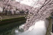 神奈川県横浜市南区近辺の画像