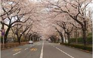 東京都国立市近辺の画像