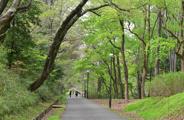 東京都武蔵村山市近辺の画像