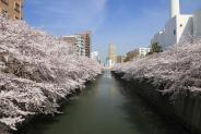 東京都目黒区近辺の画像