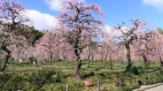 愛知県名古屋市天白区近辺の画像