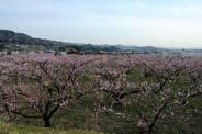 和歌山県紀の川市近辺の画像