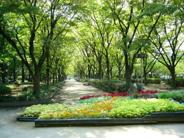 大阪府大阪市西区近辺の画像