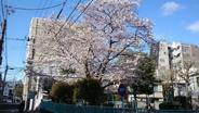東京都中野区中央近辺の画像