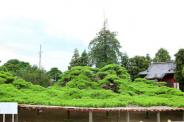 群馬県伊勢崎市連取町近辺の画像