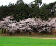 群馬県伊勢崎市安堀町近辺の画像