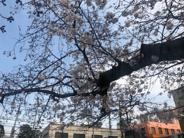 桜上水近辺の画像