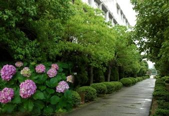 兵庫県立伊丹西高等学校の画像2