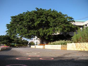 糸満市立 糸満小学校の画像1