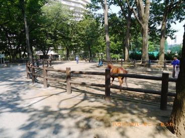 板橋区立 東板橋公園の画像5
