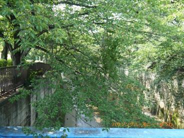 板橋区立 加賀公園の画像3