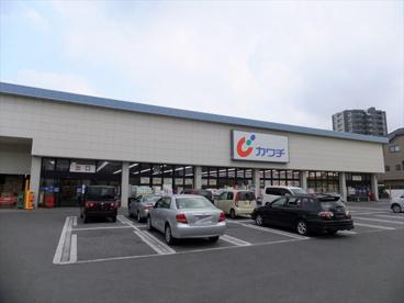 カワチ薬品 今泉店の画像2