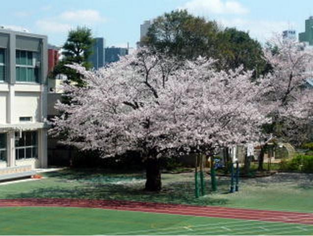 豊島区立 駒込小学校の画像