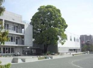 世田谷区立 松沢小学校の画像2