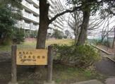 石神井台緑地
